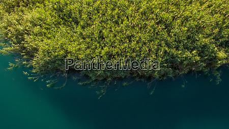 aerial view of bacina lakes vegetation