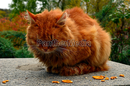 awesome red street cat is taking