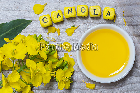 canola with oil concept on gray