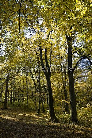 deciduous trees in the autumn
