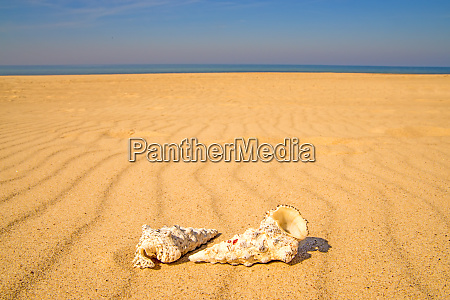 sandy beach with snails