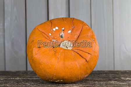 big ripe orange pumpkin close