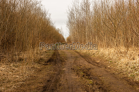 forest path with machine tracks in