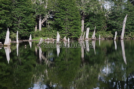 captren lagoon in the conguillio national