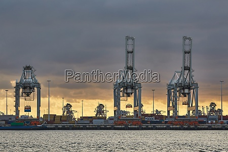 container dock in rotterdam