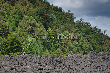 field of solidified lava and forest