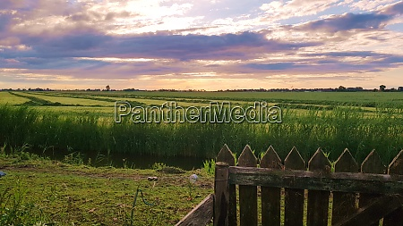 green fields in the evening with