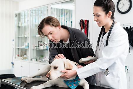 female veterinarian examining dog