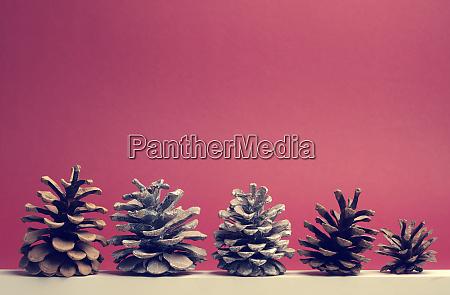 five pine cones on a white