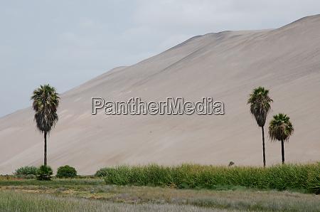 lluta valley in the arica y