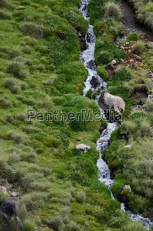 stream in a green meadow in