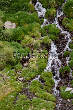 stream in a green meadow in