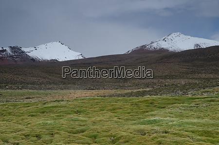 meadow and snowy peaks in lauca
