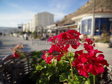 a red flowers lighted by the
