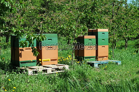 beehives, in, the, orchard - 28257744