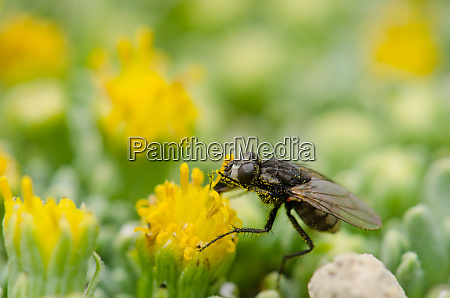 fly, feeding, on, a, flower, in - 28257976