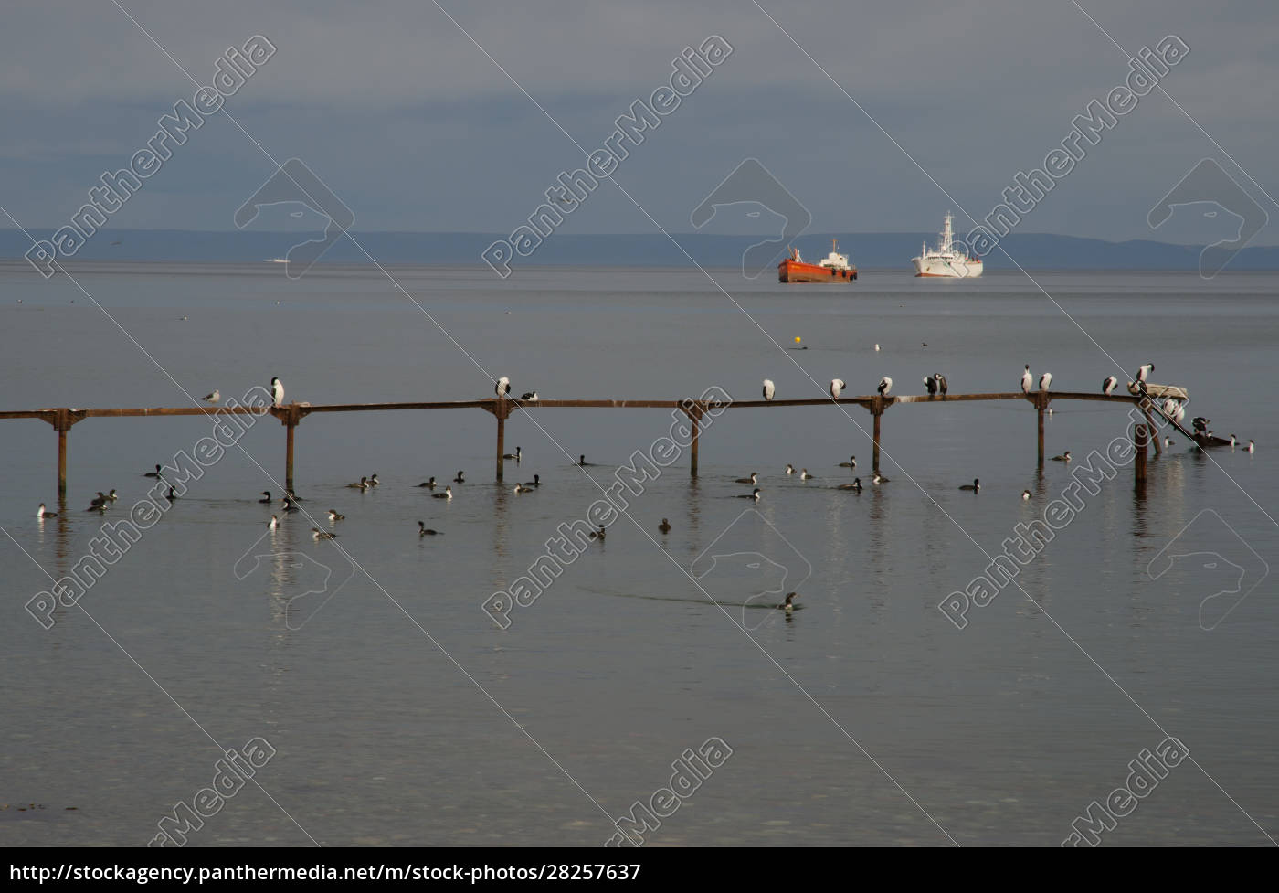 jetty, with, imperial, shags, and, ships - 28257637