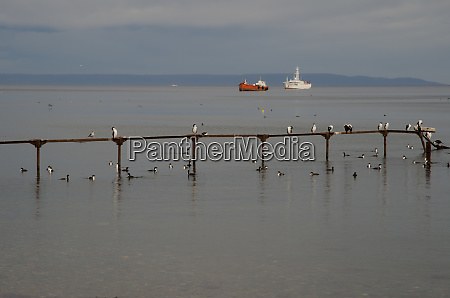jetty, with, imperial, shags, and, ships - 28257656