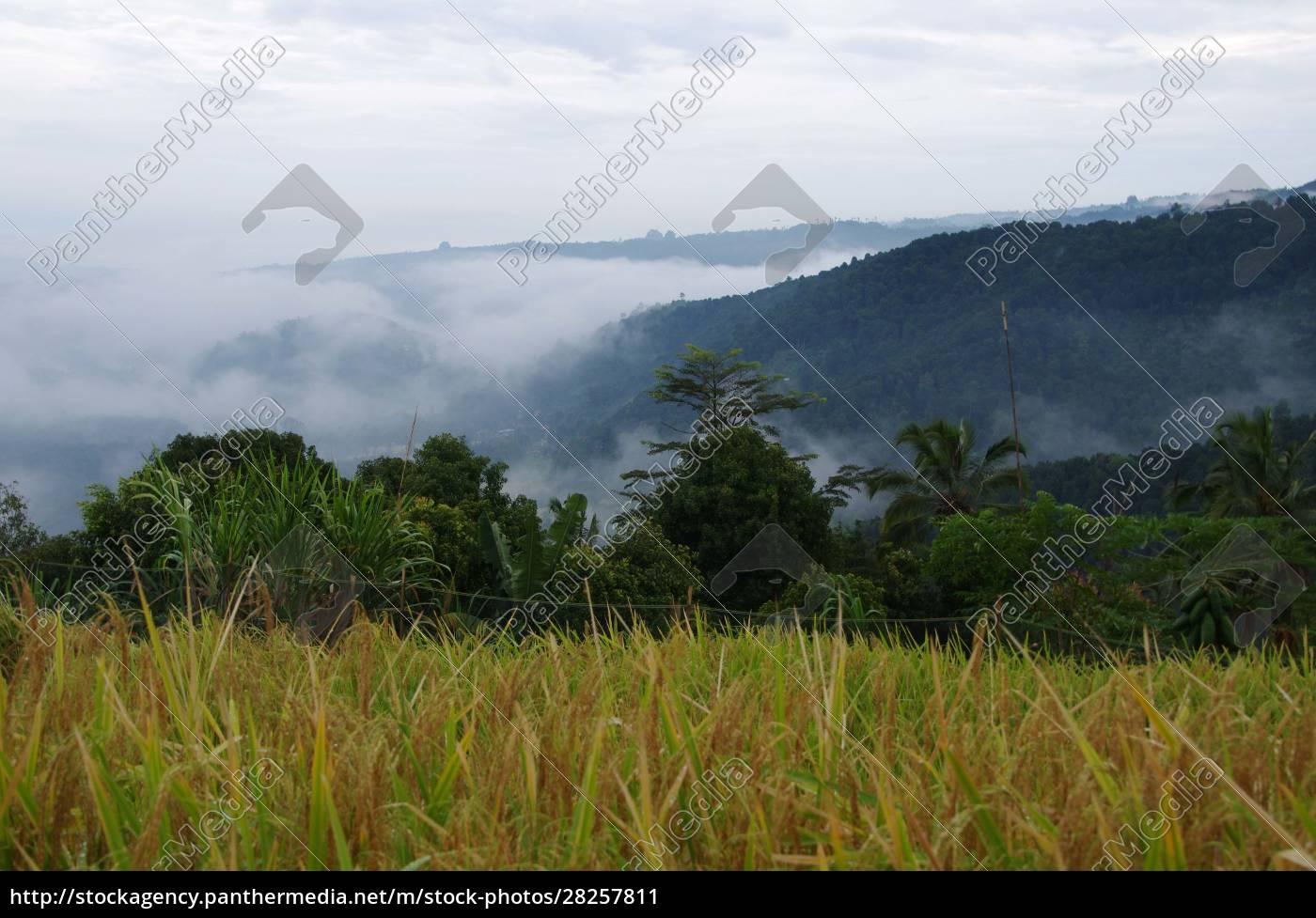 landscape, in, munduk, on, the, bali - 28257811