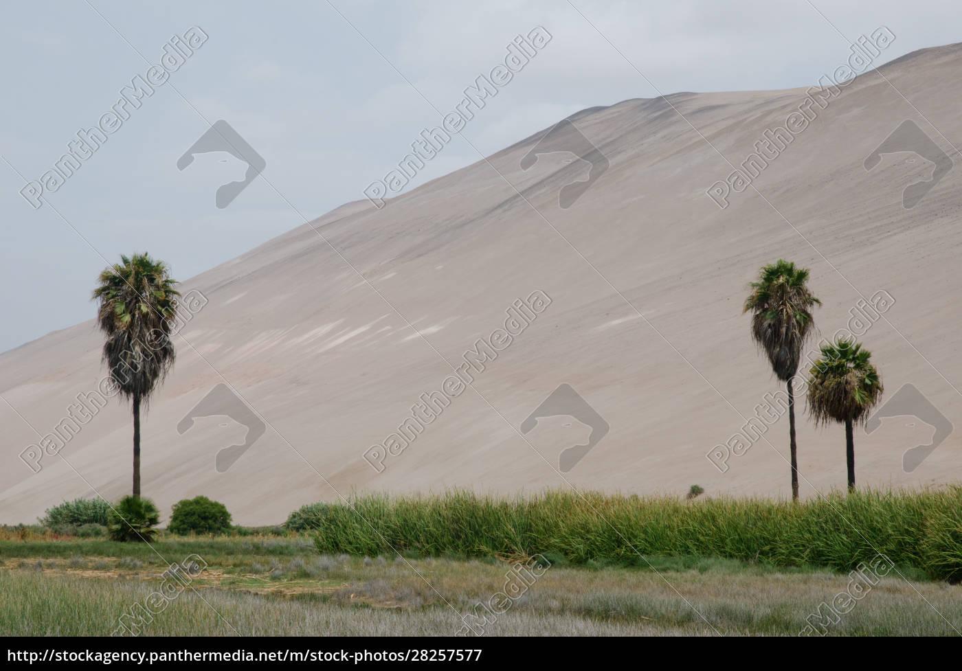 lluta, valley, in, the, arica, y - 28257577