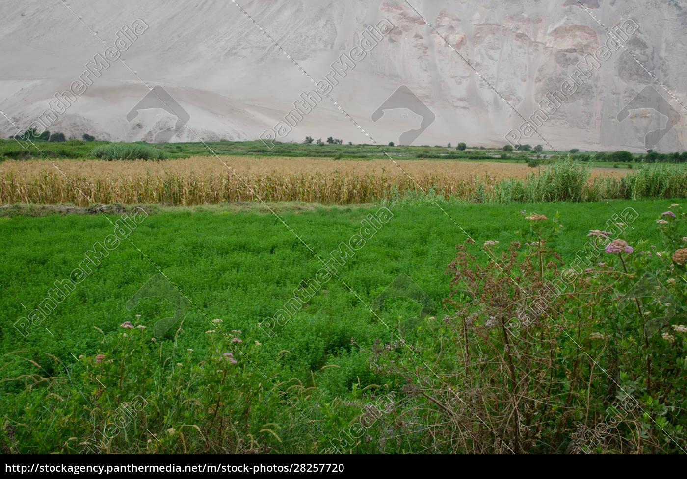 lluta, valley, in, the, arica, y - 28257720