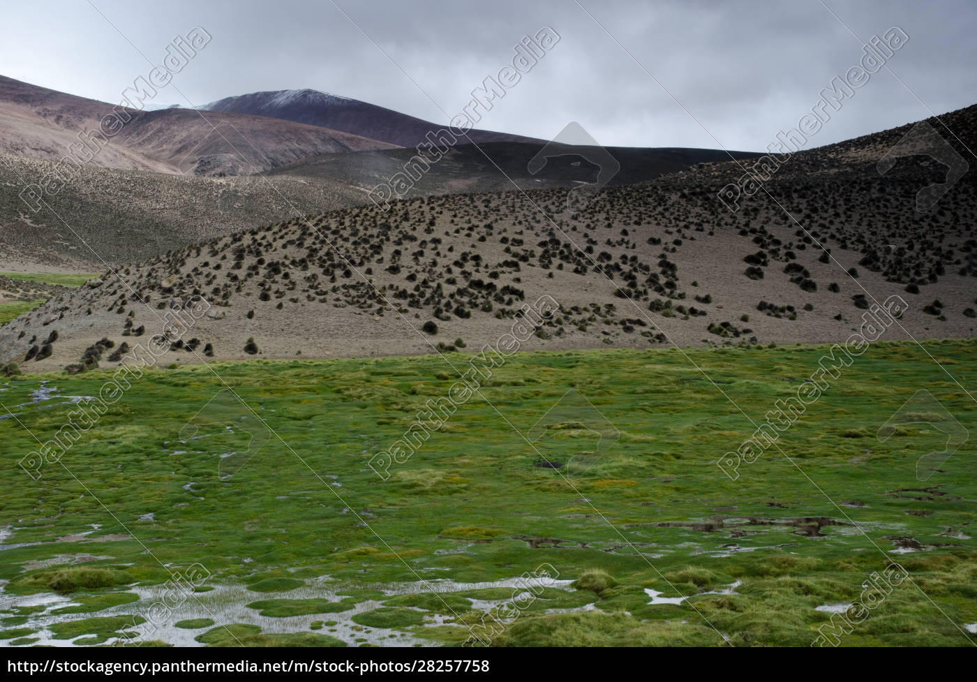 meadow, and, hill, in, lauca, national - 28257758