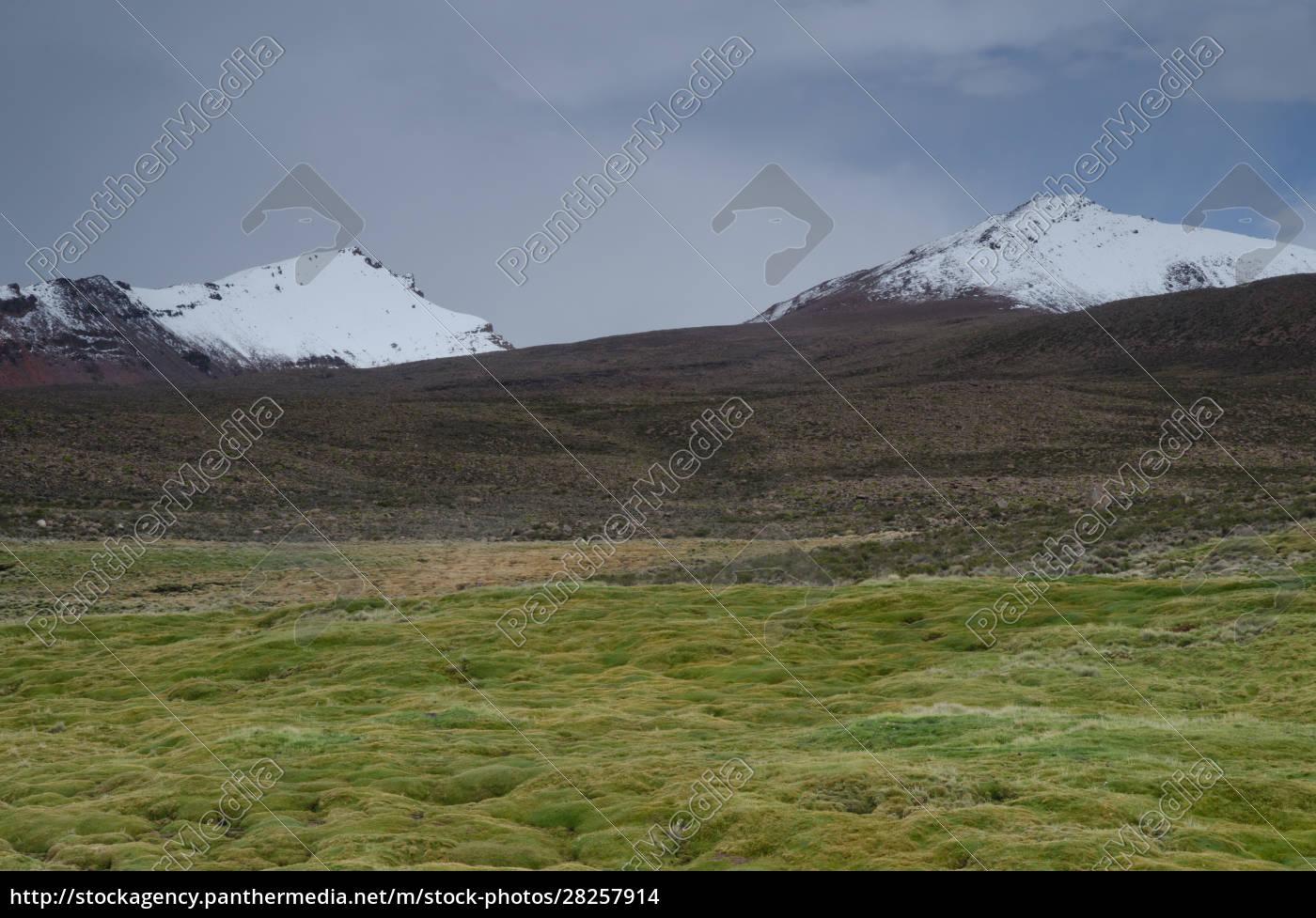 meadow, and, snowy, peaks, in, lauca - 28257914