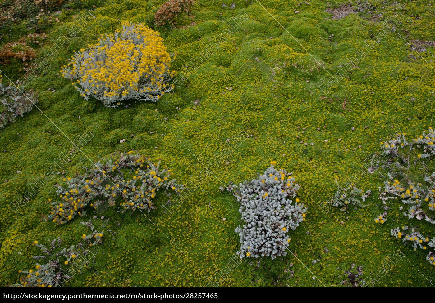 plants, of, senecio, sp., and, ground - 28257465