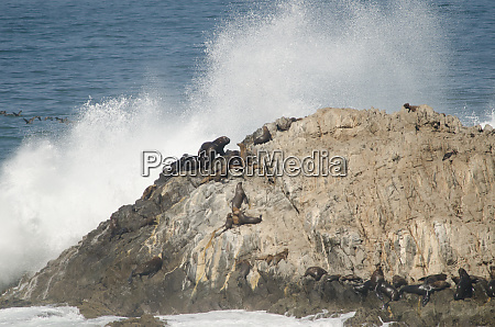 rocky cliff with south american sea