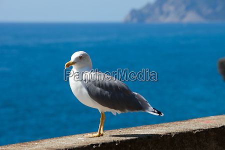 gull, on, the, background, of, the - 28258258
