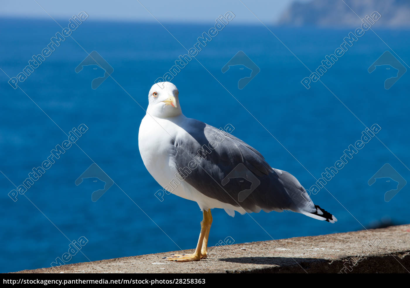 gull, on, the, background, of, the - 28258363