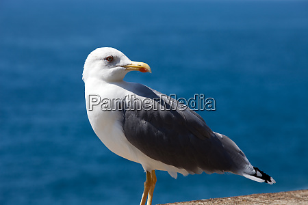 gull, on, the, background, of, the - 28258365