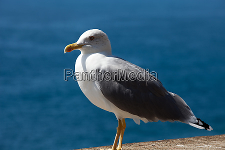 gull, on, the, background, of, the - 28258367