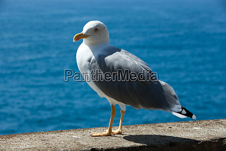 gull, on, the, background, of, the - 28258396