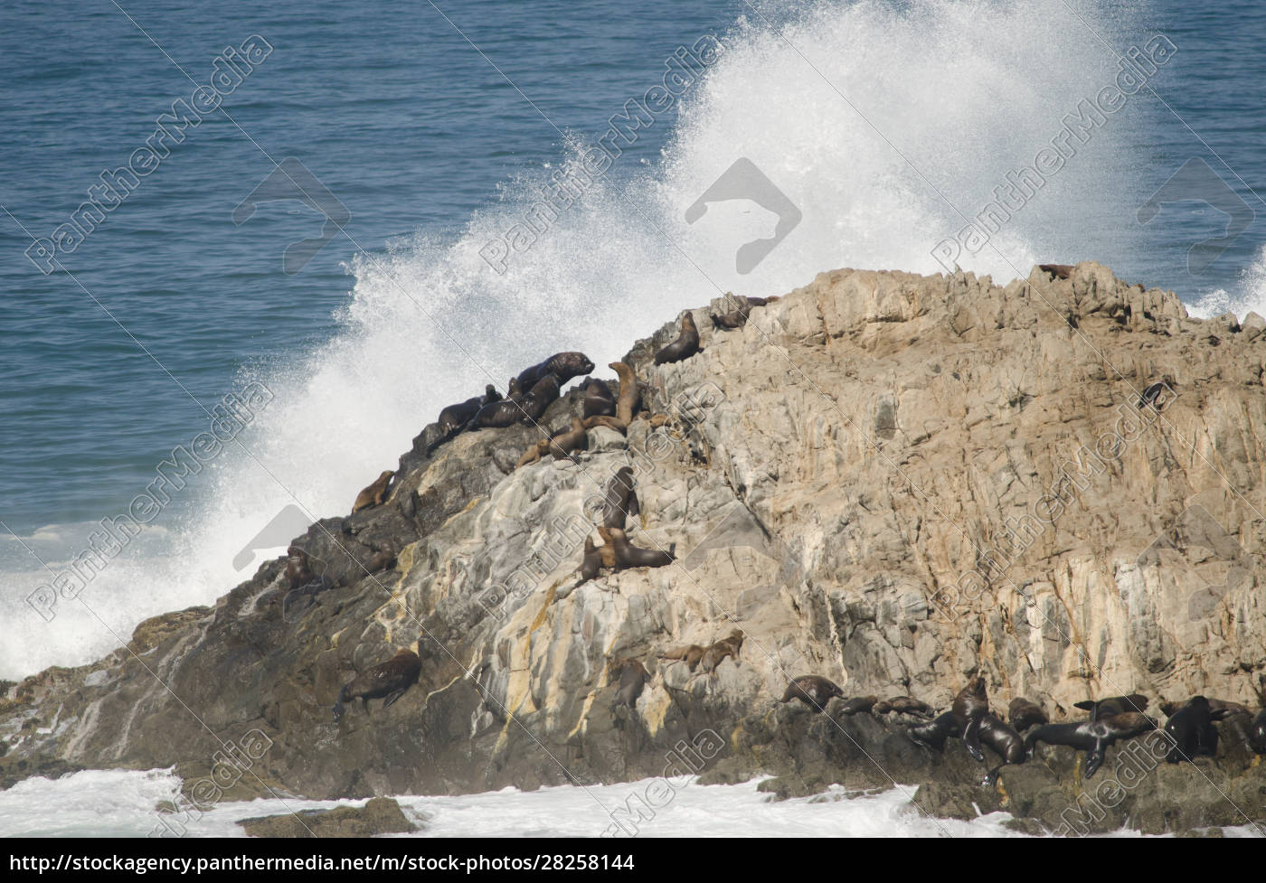 rocky, cliff, with, south, american, sea - 28258144