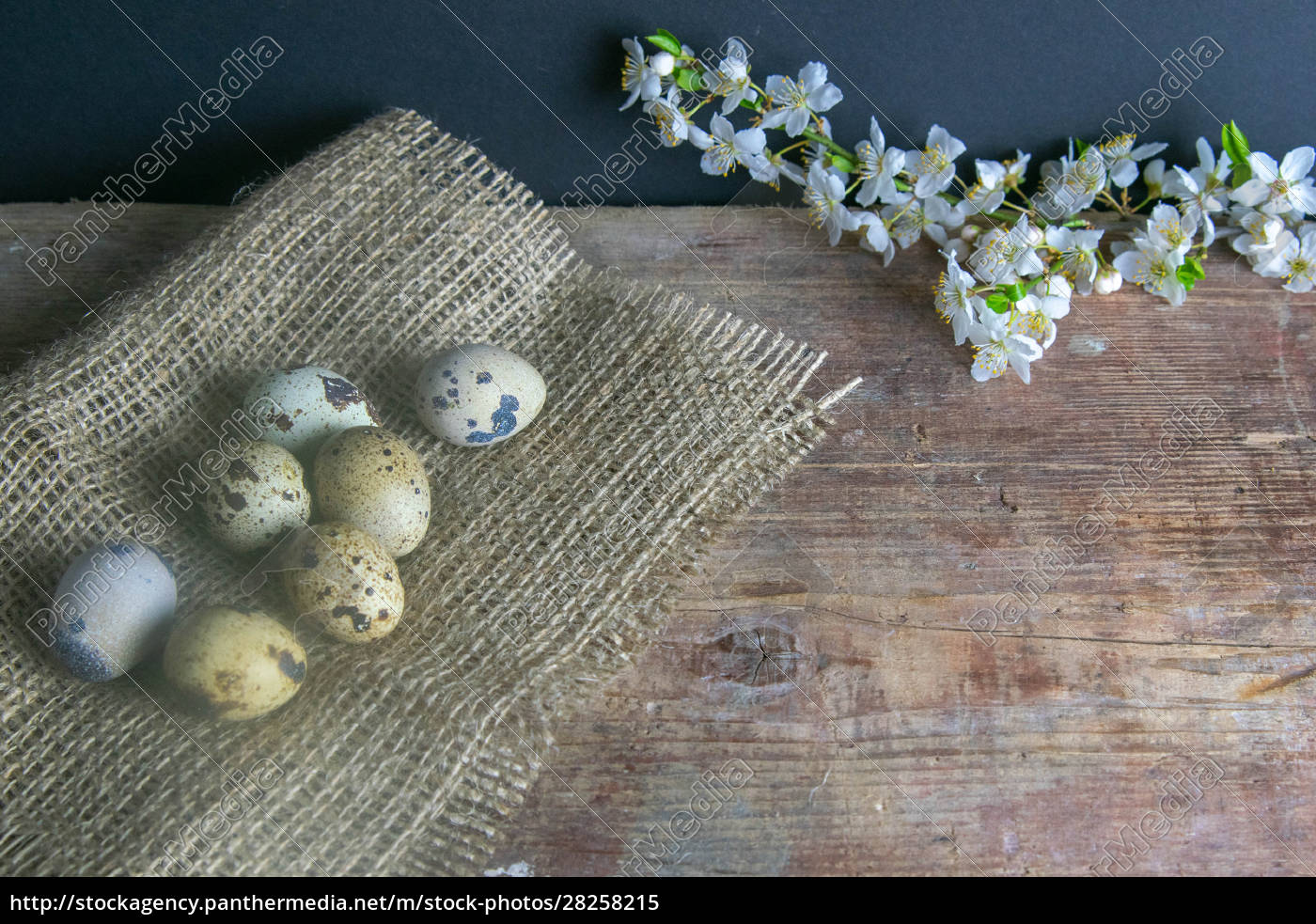 the, quail, eggs, stand, on, the - 28258215