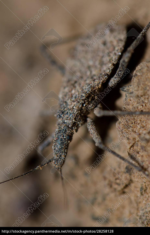 true, bug, in, las, cuevas, of - 28258128