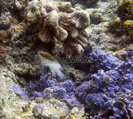 togian, island, sea, ecosystem, with, fish - 28259538
