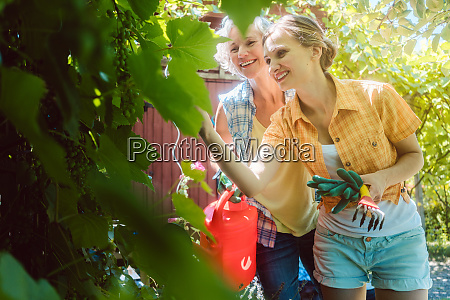 senior and young woman checking fruit