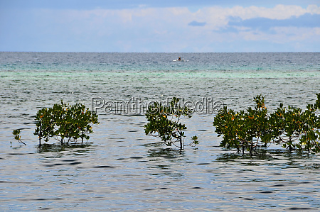 coast of bohol in the philippines