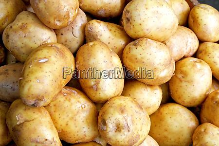 potato horizontal