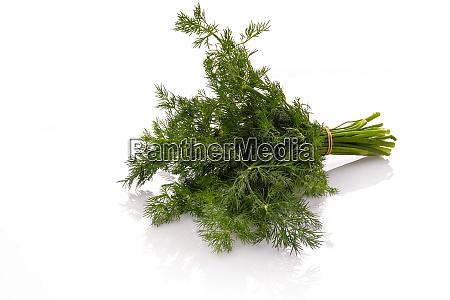 green dill herb bundle