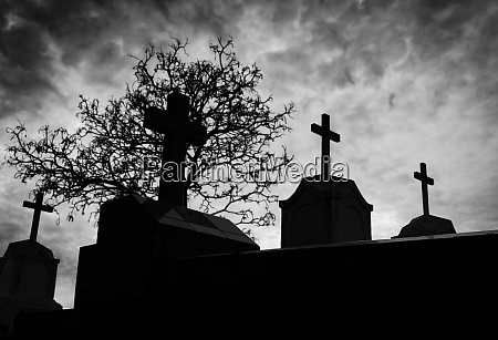 cemetery or graveyard and dead tree
