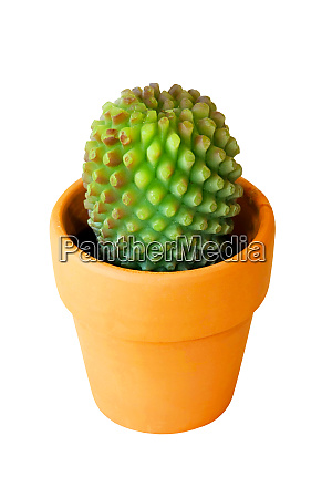 cactus, isolated - 28277579