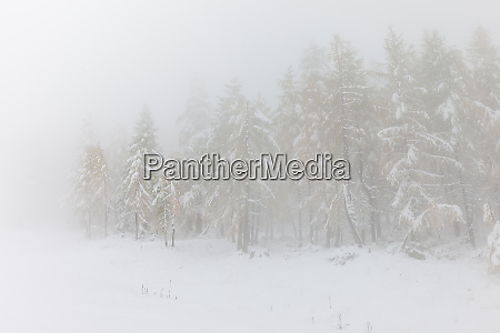 winter, forest, in, south, tyrol - 28277418