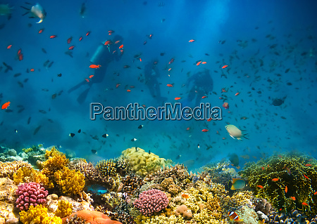 group of scuba divers exploring coral
