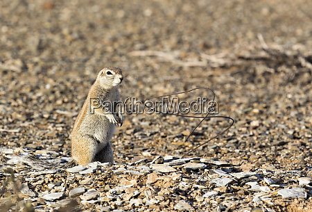 a, photo, of, a, ground, squirrel - 28278040