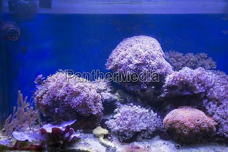 a, soft, corals, sea, aquarium, tank - 28278091