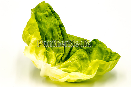 fresh, green, lettuce, salad, leaf - 28278271