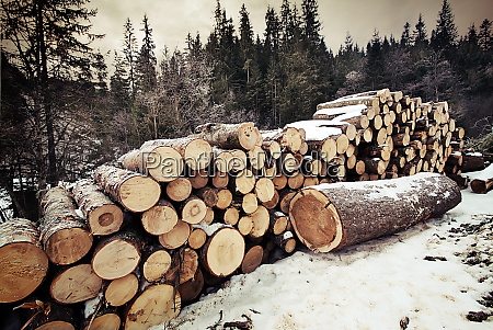 pile, of, logs, in, the, winter - 28278700